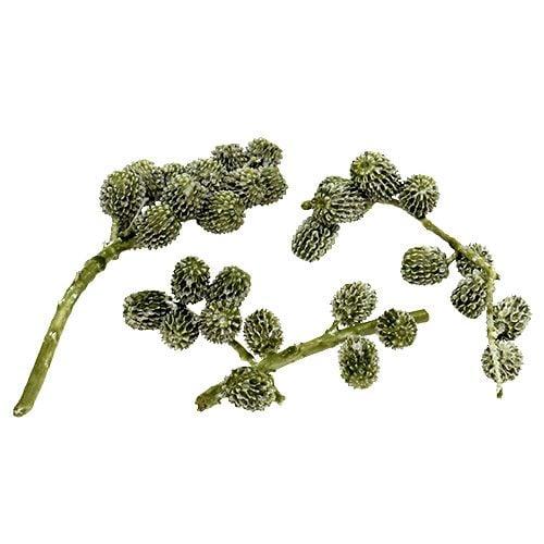 Casuarina Zapfen Grün, gewachst 110g