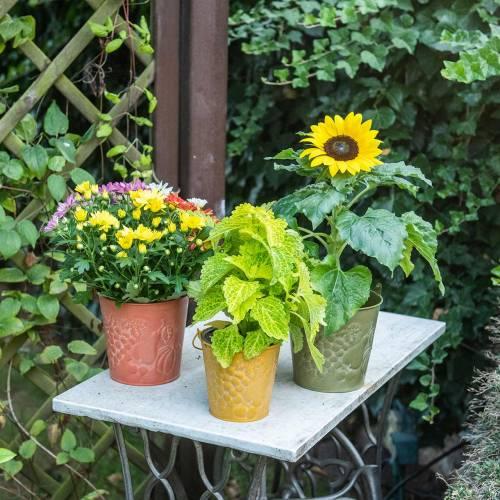 Deko-Eimer Früchte Gelb, Orange, Grün gewaschen Ø12,5cm H12cm 3er-Set