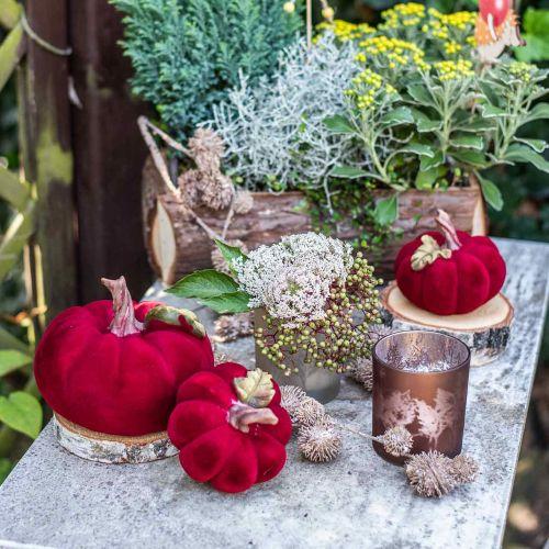Deko Kürbis Rot Herbstdeko Polyresin 15×12cm