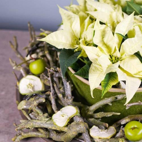 Dekoast Currybusch Grün gewaschen 500g
