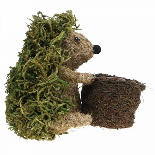 Igel mit Korb Grün, Herbstdeko zum Bepflanzen, Deko-Pflanzkorb H24cm Ø9,5cm