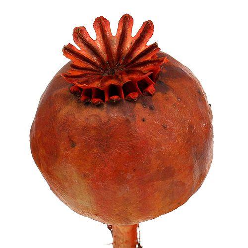 Mohnköpfe gefärbt orange 100St