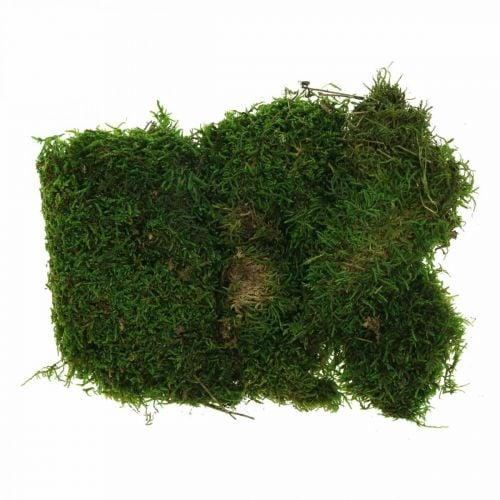 Deko-Moos zum Basteln Grün, Dunkelgrün 100g