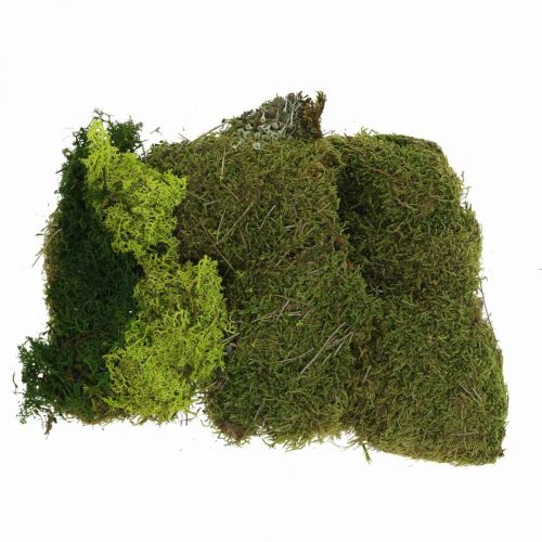 Deko-Moos zum Basteln Mix Grün, Hellgrün Naturmoos 100g