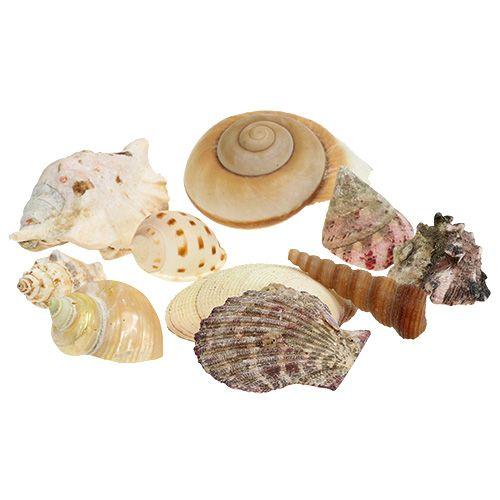 Muschelmix im Korb 16cm x 16cm