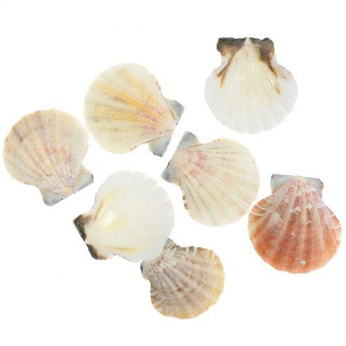 Muschel Mix Natur 3cm – 5cm 250g