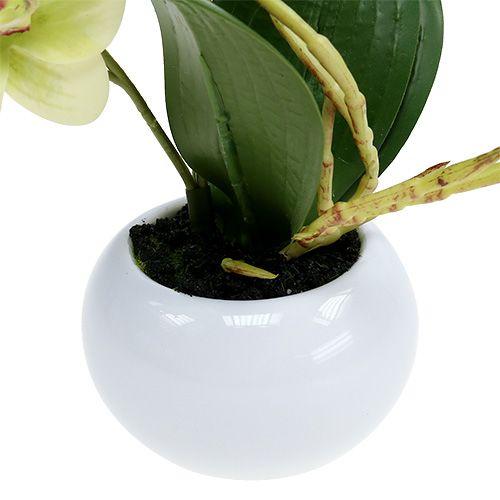 orchideen im topf gr n h30cm einkaufen in sterreich. Black Bedroom Furniture Sets. Home Design Ideas