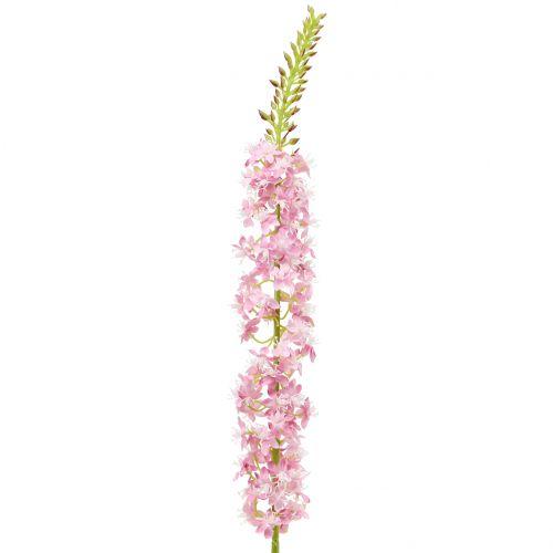 Wüstenschweif Steppenkerze Rosa 106cm