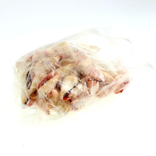 Muscheln Strombus Luhuanus 1 kg