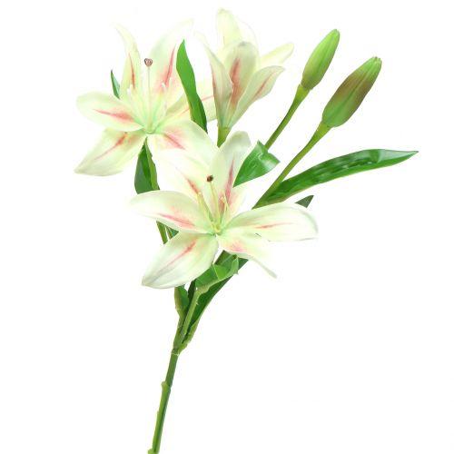 Tigerlilie Crème 60cm
