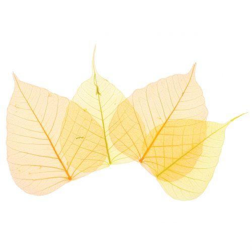 Willowblätter skelettiert Gelb, Orange 200St