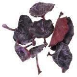 Kalix Pilz Lila, Weiß gewaschen 100St