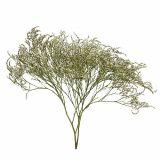 Strandflieder, Trockenblumen, Statice Tatarica, Meerlavendel, Limonium, Natur 100g