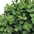 Buchsbaum Kugel künstlich Grün Ø18cm